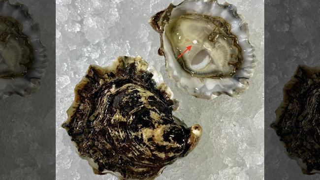 The rare find marks the latest instance of a New Jersey diner finding a pearl inside an oyster. Picture: Stern & Bow.
