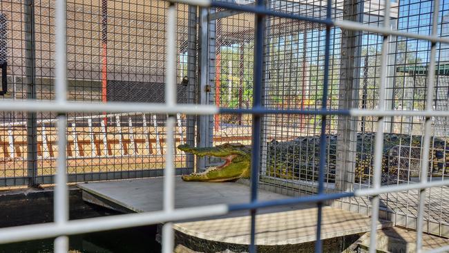 The property includes a custom-built crocodile enclosure. Picture: LJ HOOKER