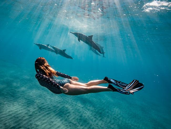 There were about 60-70 dolphins at the time. Picture: Erez Beatus