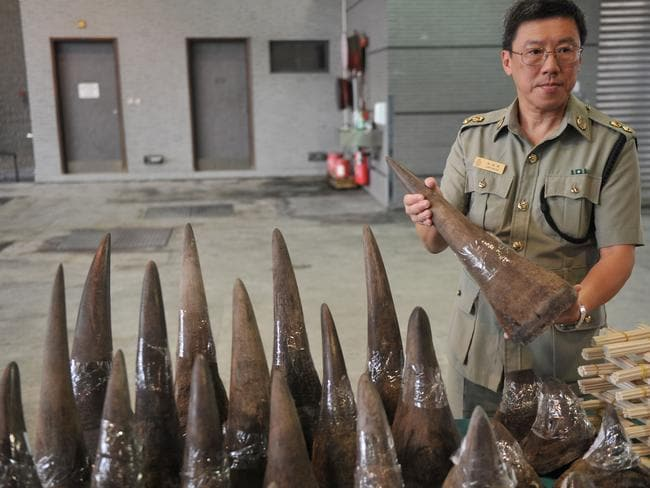 Rhino horn is more valuable than cocaine or gold. A single rhino horn can sell for up to half a million US dollars in Vietnam and parts of Southeast Asia where urban legend touts it as a potent aphrodisiac and even a cure for cancer. Picture: Aaron Tam