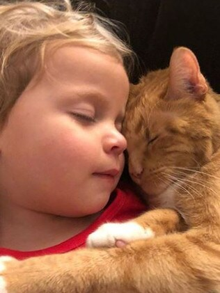Bailey, the ginger charmer was an incredibly affectionate cat. Source: Instagram/Bailey No Ordinary Cat