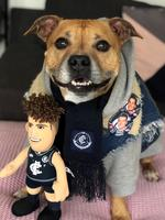 "Bolton is a happy boy when he has all his Carlton gear on, and the seven-year-old English staffy is obsessed with his Charlie Curnow doll and footballs: ""We have to hide all the footys in the house or he won't calm down. He has a little footy that he takes everywhere with him and he normally sleeps with it."" Picture: Paul Moss, Malvern East"