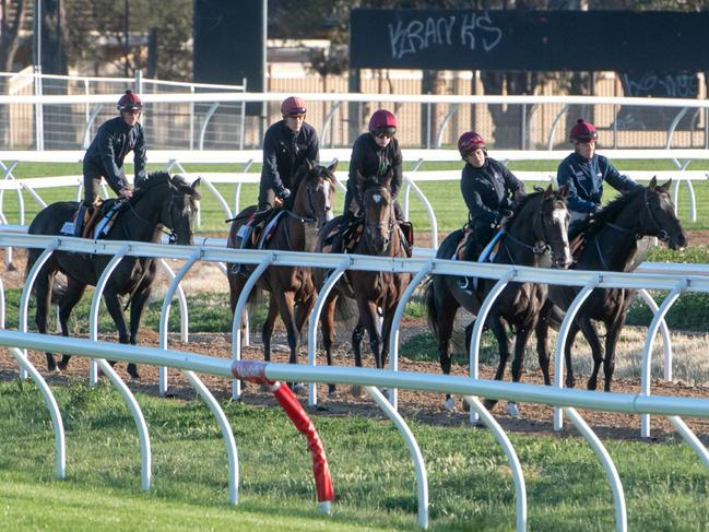 The first instalment of international horses will arrive at the Werribee Quarantine Centre next week.