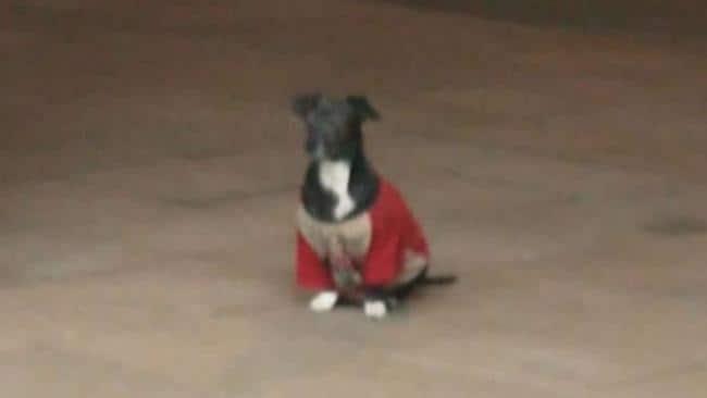 Anjing yang setia menunggu majikannya.