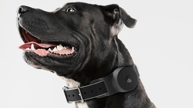 You can set up the device to get alerts when your pet enters or exits a particular area.