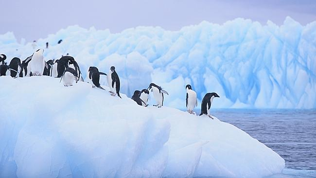 Birds of a feather...Tinder has made its first match in Antarctica, with two scientists meeting thanks to the dating app. Picture: Thinkstock