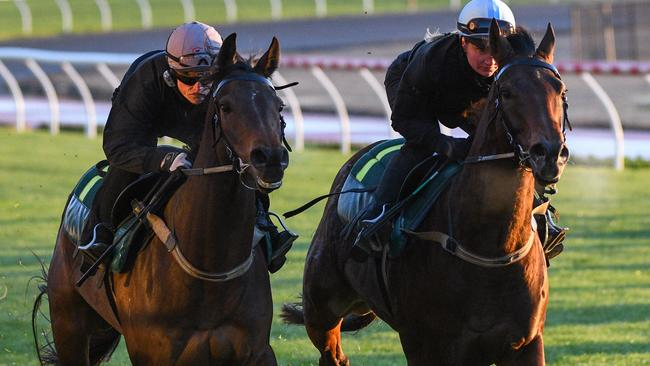 Stablemates Harlem and Sikandarabad will clash again in the Feehan Stakes. Picture: AAP