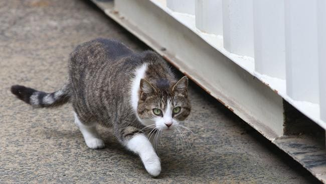 Stray cats reportedly hang out around Ms Matsumoto's home and now one of them is a prime suspected in her 'attempted murder'. Picture: Damian Shaw