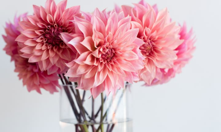 Having fresh flowers in the house can reduce anxiety