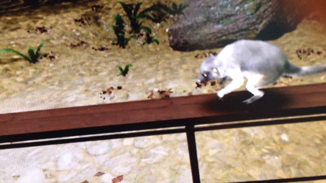 Virtual reality tree kangaroo