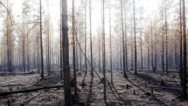 A burnt forest around Angra, in Ljusdal municipality of Sweden, after a major wild fire. Picture: AFP / TT NEWS AGENCY / Mats Andersson.
