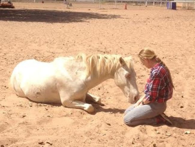 People sometimes find it helpful to bond with horses for therapy. Picture: Supplied