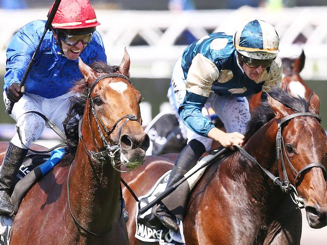 Marmelo (right) came second in last year's Melbourne Cup.
