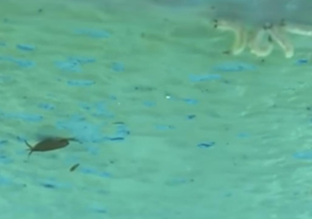 Maggots Found on Northern Sydney Beaches