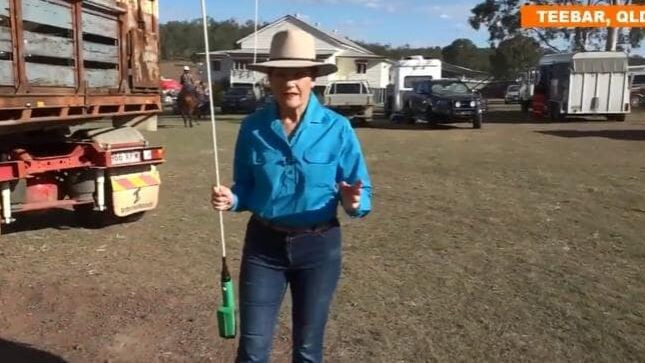 Who gave Pauline access to cattle prods?
