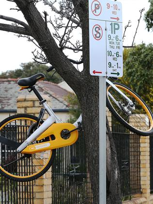 An oBike left in a tree in Union St, Windsor. Picture : Ian Currie