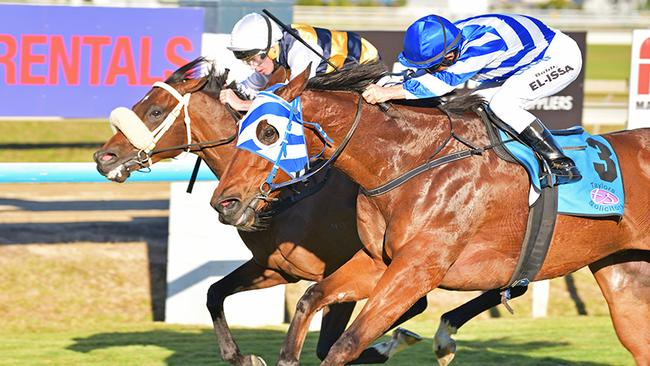 Tucano (rails) is just edged out by Balboa Rocks in the recent Mackay Cup. Picture: Taron Clarke