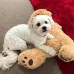 Peta Hyde's pooch and her toy. Puppy Power List. RCN