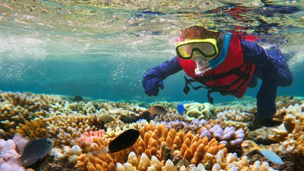 great barrier reef report shows more coral decline nt news
