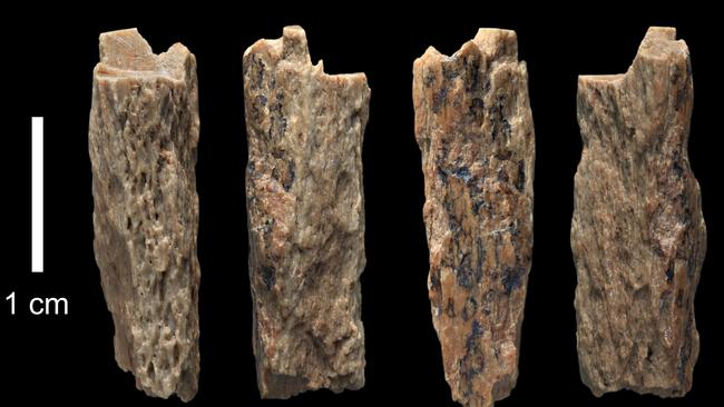A bone fragment of 'Denisova 11' found evidence of interbreeding of a Neanderthal and a Denisovan, it was found in 2012 by Russian archaeologists in Siberia. Picture: Supplied