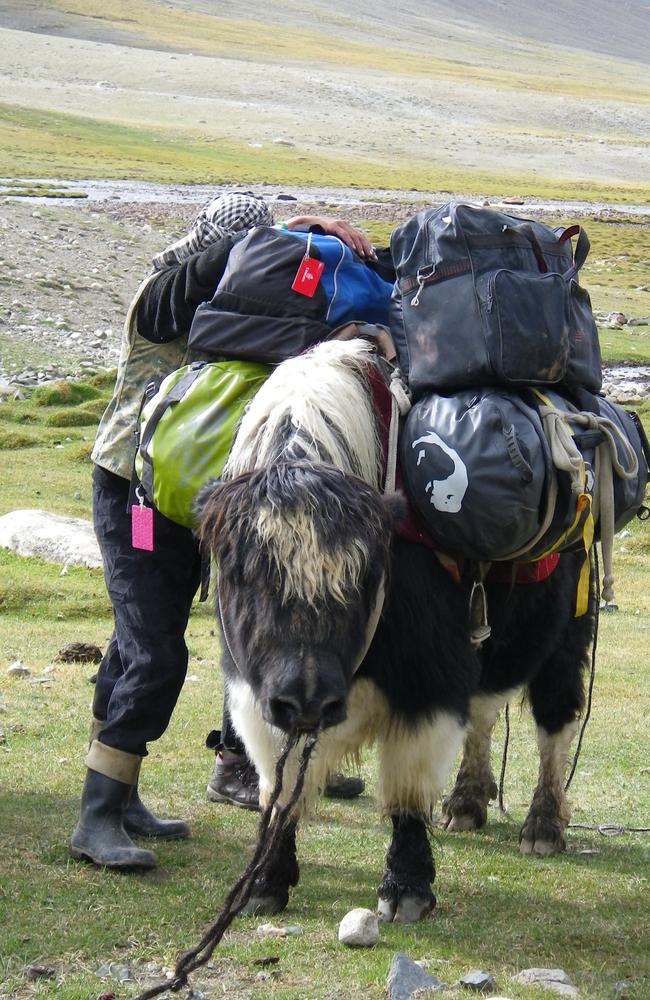Yaks carrying guests baggage. A far cry from the planes used to get them there.