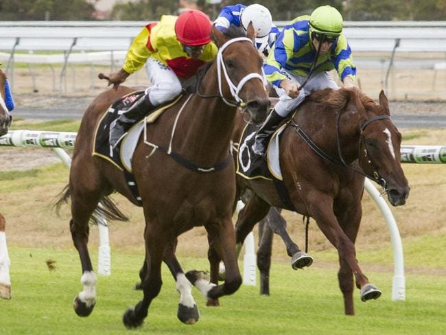 Music Bay wins on debut at Morphettville. Picture: Atkins Photography