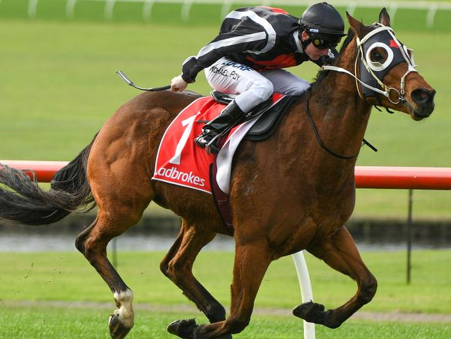 Cult racehorse Jungle Edge will need to be at his absolute best if he wins All-Star Mile selection as the 1600m is at the top of his distance range.