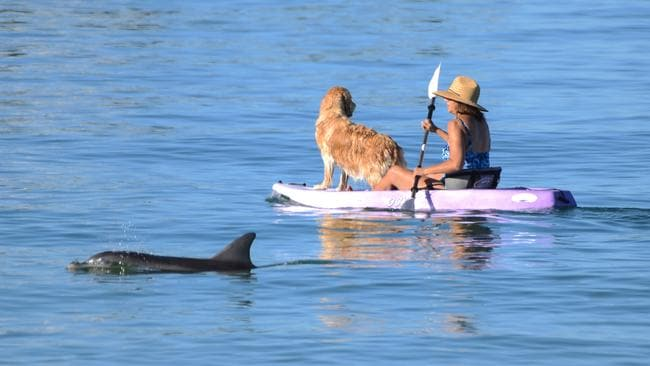People at Henley Beach early to avoid the heat: This paddle boarder and her golden retriever didn't quite see the dolphin. Picture: AAP / Brenton Edwards