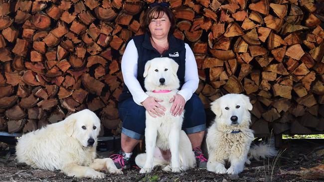 Dog lover Jodie Cawood runs Maremma Rescue Victoria | The