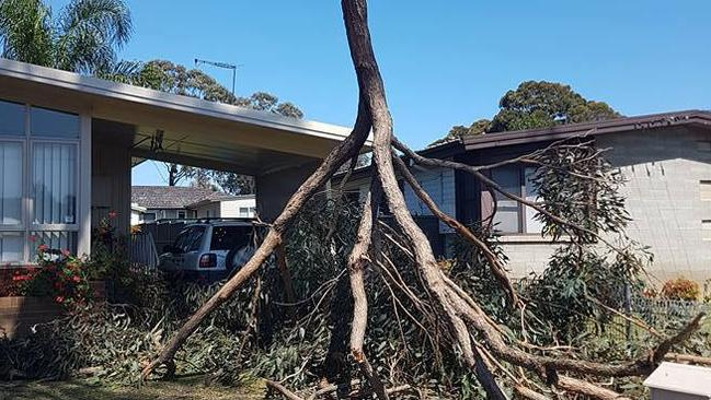 SES Mt Druitt, in western Sydney, attended to this uprooted tree during heavy winds. Picture: A. Jarvis
