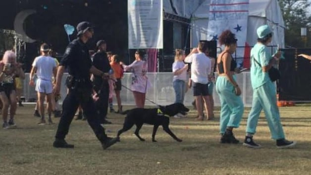 A sniffer dog on patrol at Secret Garden Festival. Picture: via Sniff Off Facebook