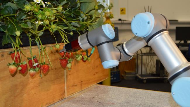 A robotic harvester, picking fruit, developed at the University of Essex in Britain.