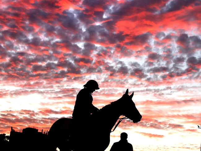 Everest racehorse Sunlight during a trackwork session at Royal Randwick.