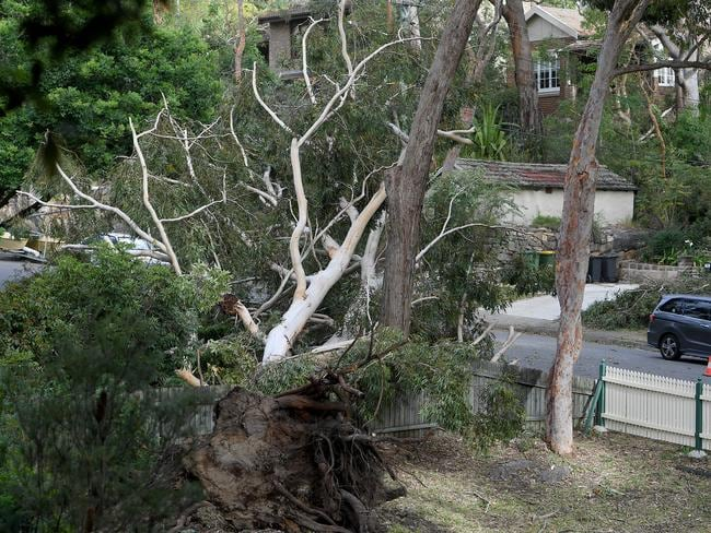 Storm damage is seen in Gordon, north of Sydney including fallen trees blocking roads. Picture: AAP Image/Dan Himbrechts