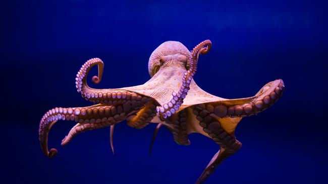 octopuses and panspermia is life on earth from alien dna