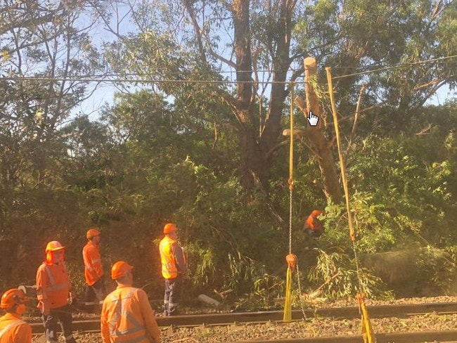 A fallen tree due to the wild winds stopped trains north of Sydney.